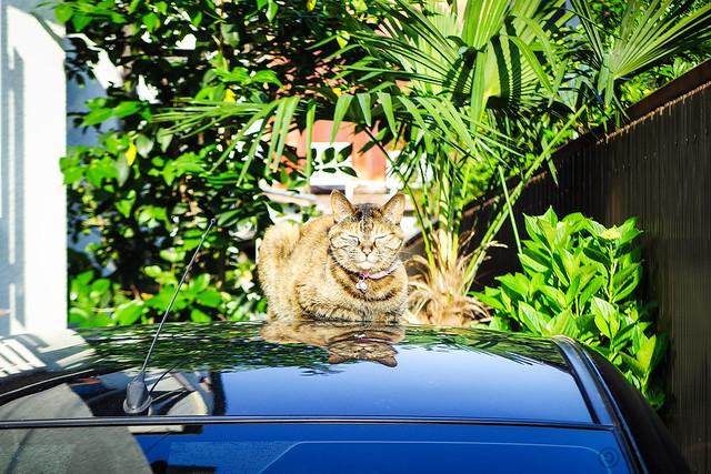 Today's Cat@2015-05-20