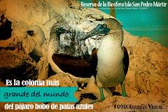 san-pedro-2 (SEMARNAT) Tags: california mxico mexico san pedro isla sanpedro golfo martir sanpedromartir golfodecalifornia