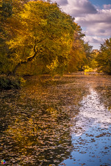 Golden autumn 1 (JTPhotography) Tags: autumn golden leaves trees nature water reflections sunny wildlife rivers lake panasoniclumixg6 olympus918mm