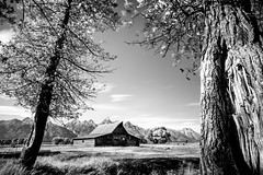 tetons_2016_27web (Jessica Haydahl Photography) Tags: grand teton national park wyoming tetons mormon row john molton barn apsens fall colors infrared photography nikon d810 d7000 pentax 645z medium formate landscape ansel adams