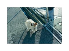 30 (LightWithoutHeat) Tags:   film japon japan nikonf5 135 c41 filmisnotdead analog argentique filmphotography imacon grainisgood  fukuoka fujicolorc200