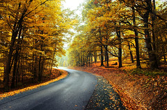Autumn Journey XVIII. (Zsolt Zsigmond) Tags: forest trees woods road fall autumn leaves foliage light landscape landschaft bright walk picture day nikkor exposure colorful colours flickr nature tree art yellow outdoor serene