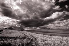 Strmische Felder (Mwenjgerin) Tags: bume felder fotografinjb schwarzweis