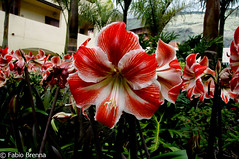 DSC_0002 (Fabio Brenna) Tags: flower flowers fiori fleurs flores colors orchid orchidea orchidee orchids orqudeas orchides