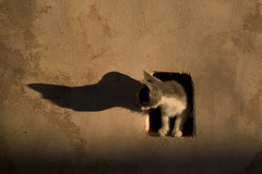 Monstruous shadow (ramosblancor) Tags: humanos humans naturaleza nature animales animals macotas pets gatos gatitos cats kitten atardecer sunset sombra shadow gracioso funny rethymno creta crete grecia greece