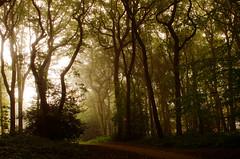 The path from dark to light (SimonLea2012) Tags: colour leaves fall autumn nature uk path sunrise forest woodland warleywoods morning trees woods shadowsandlight lightanddark