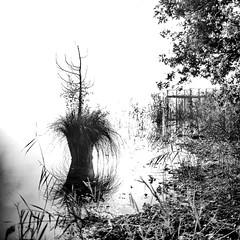 2016-10-31_10-26-36 (Pluie du matin) Tags: hatman nb bw landscape paysage carré squared nature lac lake hourtin france monochrome