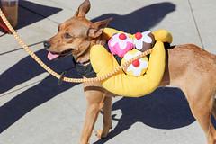 rana-5838 (angelsrescue) Tags: aau pets angels among us pet rescue alpharetta ga dog love