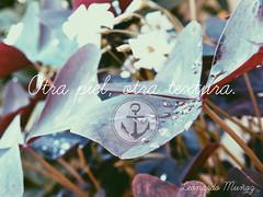 Otra piel, otra textura. (leonardomuoz99) Tags: nikon coolpix p500 nikoncoolpixp500 tarjeta nature trans plantas flora fauna flores gotas agua letras fuente hojas