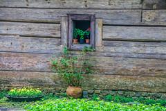 Flor (Andreza Menezes) Tags: curitiba paran friend amor verde cores colorido memorialucraniano bosquepapa brazil brasil trip viagem jardimbotanico ceu sky janela window nuvens clouds pessoa people jardim garden madeira wood sun sol