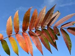 Magic in every leaf (Polya Photography) Tags: leaf leaves autumn fall colors multicolor outdoor plant sky magic closeup beautiful nature ngc