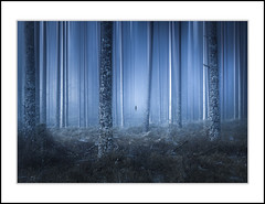 LOST (andreassofus) Tags: landscape nature fineart photoart trees dream dreamy lost mist misty silhouette photoshop digitalblending woods forest