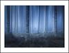LOST (andreassofus) Tags: landscape nature fineart photoart trees dream dreamy lost mist misty silhouette photoshop digitalblending woods forest