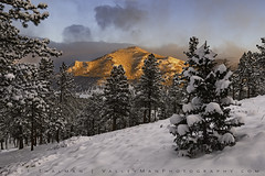 Warm Embrace in a Cold Place (Matt Thalman - Valley Man Photography) Tags: bighornmountain colorado nationalpark rmnp rockymountainnationalpark cold cool forest landscape mountain mountains snow snowscape snowy trees winter