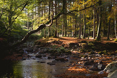 That time of year.. (buhamdi) Tags: adventure autumn d600 forest green hiking hike landscape light 50mm river colors view beautiful nikon nature northernireland newcastle northern mountains mountain photography ireland trees travel tree