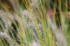 (careth@2012) Tags: bokeh nature abstract leaves scene scenery scenic