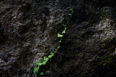 Per aspera ad astra (janwellmann) Tags: reachout base rock nature leaves grow plant reach