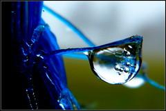 Nebeltropfen (Barbara Wenzel-Winter) Tags: nebeltropfen regentropfen tautropfen makrowelten makro tropfen tropfenwelten spiegelungen abstrakt