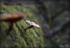Wilderness Wonders - Wild Mushrooms (FarhadFarhad .(Farhad Jahanbani)) Tags: wilderness wonders wild mushrooms nature