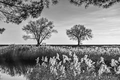 Autumn landscape (s.austinukit) Tags: autumn autunno landscape nature vista bw bianco nero black whit
