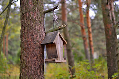 No squirrels today :-)) (L.Lahtinen) Tags: autumn wood forest bokeh finland flickr nature luonto syksy mets landscape maisema mntymets nikond3200 50mm nikkor dof depthoffield syyskuu trees lintulauta suomi larissadatsha