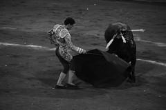 Danza taurina (valeriaatorres) Tags: gins marn torero toro ruedo capote banderillas tauromaquia bullfighting monterrey mxico