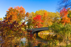 Bow Bridge in Fall (JMFusco) Tags: centralpark autumn fall bowbridge newyorkcity manhattan