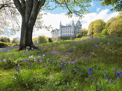 Once upon a... (~Shurlee~) Tags: dunrobincastle scotland fuji fujifilm travel fairytale castle palace bluebells summer pretty visitscotland