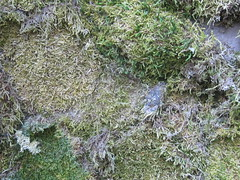 Mossy Surface (shaire productions) Tags: wallpaper brown abstract green art texture nature grass photoshop photo moss natural image background free textures photograph creativecommons downloads download backgrounds layer resource imagery grassy layering tactile royaltyfree t4l freedownload copyrightfree freebackground freetexture photoshoplayer