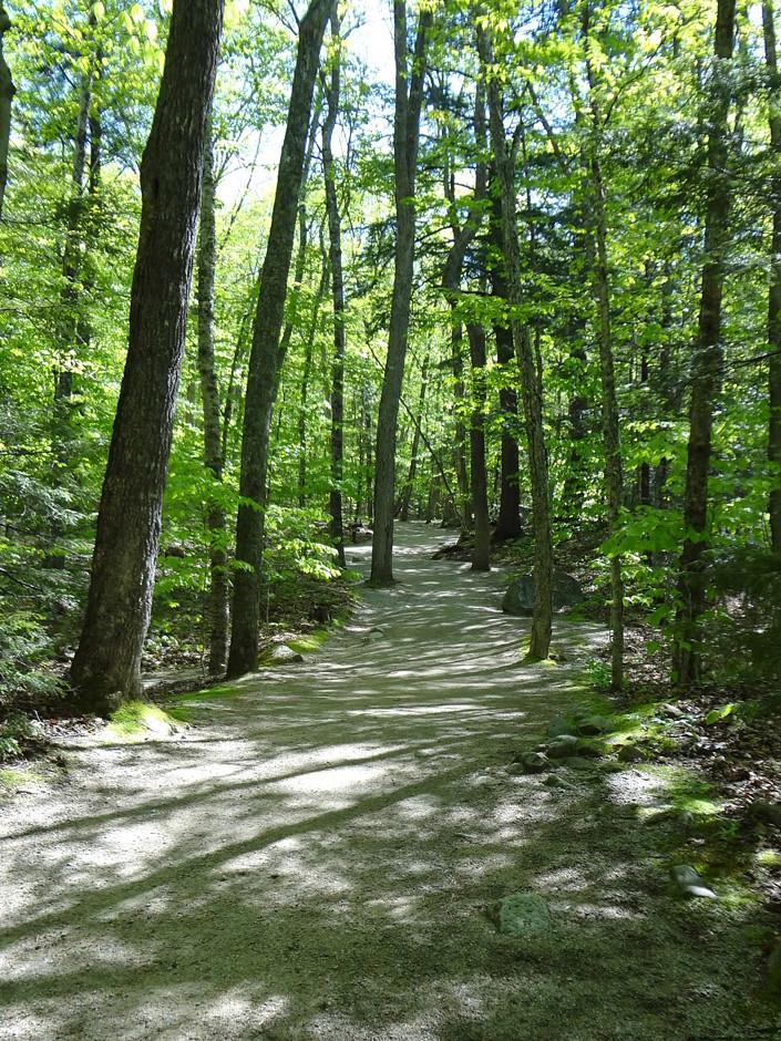 Sunny Flume Path