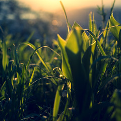 (mgratzer) Tags: sun green grass backlight austria carinthia sunseet frontlight ebenthalinkrnten