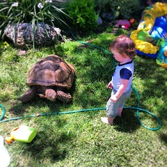 Baby Huxley saying HI to our green lawn mower Yortoise. #tortoise #turtle #sulcata #baby #sunday #yortoise (Teod Tomlinson) Tags: art birds painting toys gallery surreal pop oil expressionist raven hive tool impressionist juxtapoz the