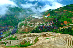 Longji-terraced-fields (MPBHAIBO) Tags: china travel summer cloud house mist mountain green wet beautiful beauty rain fog landscape outdoors spring asia village rice guilin farm nobody  backgrounds agriculture idyllic cloudscape ricepaddy scenics traditionalculture longsheng  chineseculture  landscaped  famousplace ruralscene beautyinnature terracedfield   peopletraveling   highangleofview guangxiregion longjitetian