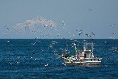 Mysterious Mt. Rishiri and Fishing Boat (keithlommel) Tags: seagulls birds animals hokkaido haboro teuriisland
