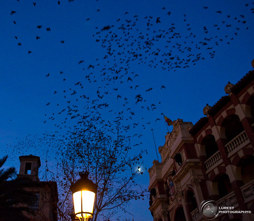 Bats of La Misericordia #Zaragoza