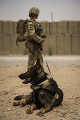 130424-F-SI788-259 (U.S. Department of Defense Current Photos) Tags: dog afghanistan vertical germanshepherd k9 ied afg kandaharprovince fobpasab