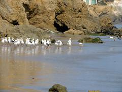 Picture 422 (DividedXZero) Tags: california sea beach nature elmatador