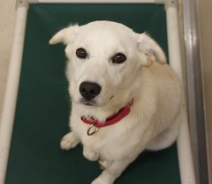 Molly(2) (Mary022378) Tags: dogs puppies naperville adopt adoptpetshelter