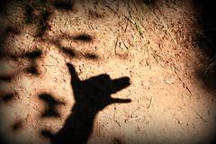Lcher la proie pour l'ombre.....! (LILI 296....) Tags: chien silhouette ombre oreille feuille museau canoneos450d
