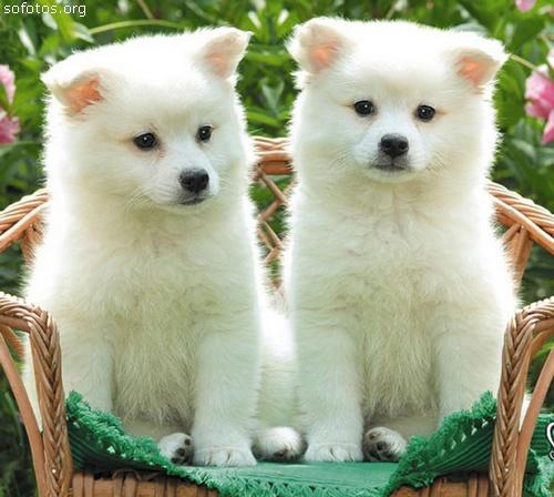 Filhotes de cachorros lindos