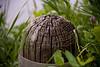 Post Ridges (HOARYHEAD) Tags: minnesota dof post fencepost lilydale nikond700 lilydalemn nikon28300mm postridges