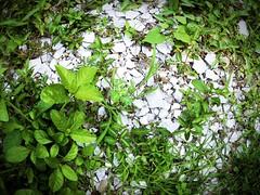 rumput daun lantai (PieceOfMindArt) Tags: plants nikon fisheye s3000