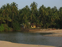 Kannur district, Kerala, India, Asia, North-Kerala, Indien, Asien (oksana8happy) Tags: ocean sea copyright india beach water strand sand asia asien heiconeumeyer meer wasser kerala palmtrees palmtree ufer palme indien coconutpalm southindia malabar southasia copyrighted palmen arabiansea ozean coconutpalms kannur kokosnusspalme kokospalme cannanore northkerala coconutpalmtree südindien coconutpalmtrees arabischesmeer südasien lakshadweepsea nordkerala kannurdistrict