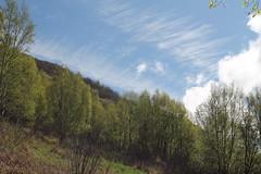 looking up (Willie Kalfsbeek) Tags: trees sky alaska clouds ak willie kalfsbeek