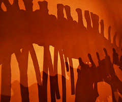 Shadows of Dinosaurs (studioferullo) Tags: abstract art beauty big bright colorful colors orange brown gold ochre contrast old design detail bone bones skeleton skeletons history light minimalism nature natural pattern organicpattern pretty scene shadow shadows study texture tone tones dinosaur world musem albuquerque newmexico oldtown science naturalhistory