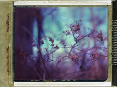 (er_code_blue) Tags: largeformat polaroidweek film 4x5 analog instant expired 59 polaroid crowngraphic graflex
