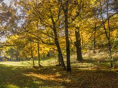 Enjoying the Fall Colors on Djurgrden (PriscillaBurcher) Tags: autumn fall stockholm djurgrden l1000758