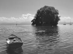 Lac Lman (JeanbaptisteM) Tags: lac lman suisse iphone mer sea cygne oiseau ciel sky bird fleur flower color summer voyage trip france paysage beaut
