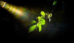 Follow the Light (Lens Bubbles) Tags: yashinon 45mm f18 lynx1000 diy lens rangefinder flare he spotlights amazing light bokeh