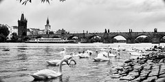 DSC08732 (photoaffaire) Tags: prag praha prague bw blackandwhite moldau tschechien czech republic sonya7 sony a7ii slr magic anamorphot voigtlnder 50mm